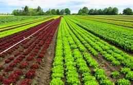 zeolita natural - cultivo hortalizas